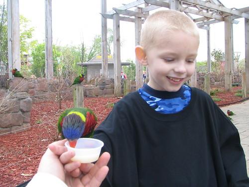 colton feeding the birds