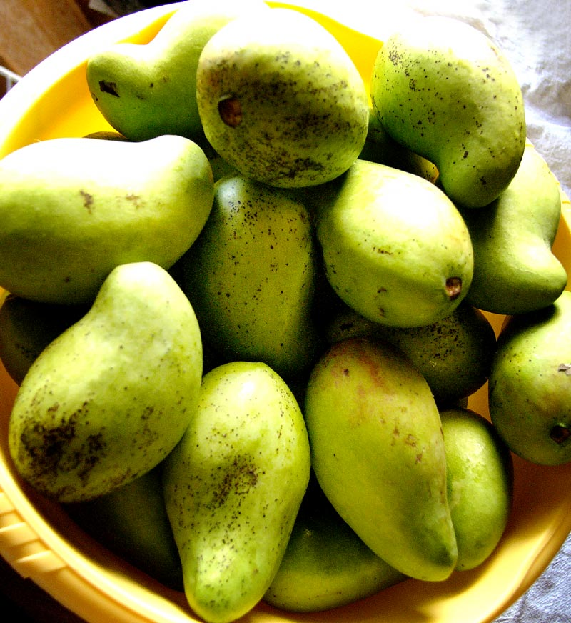 green mangos, yellow bowl