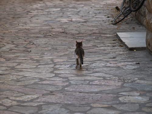 cat 26/248