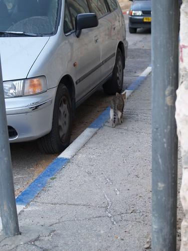 cat 46/248