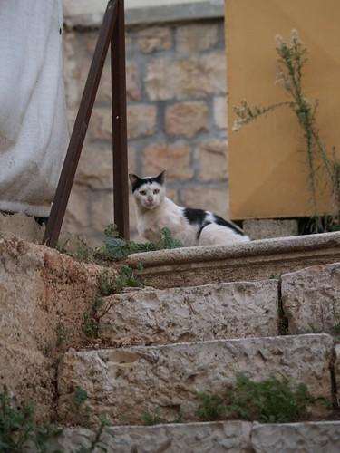 cat 57/248
