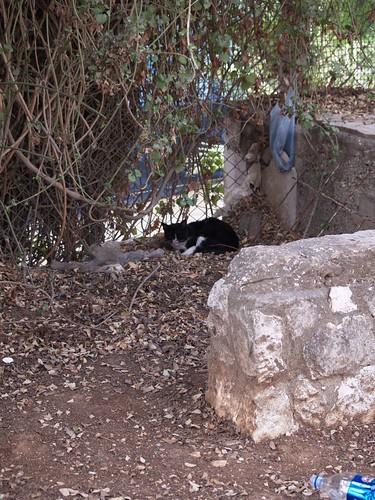 cat 64/248
