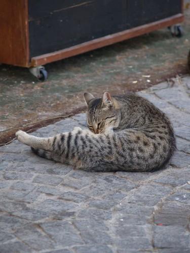 cat 79/248