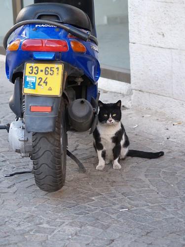 cat 92/248