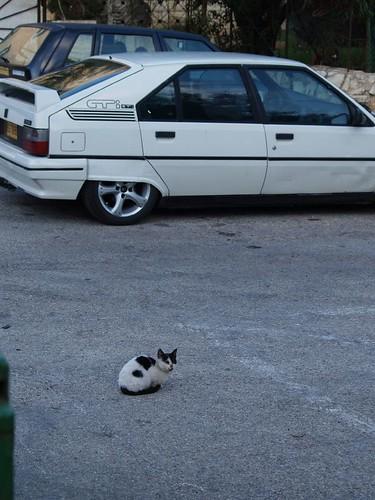cat 175/248