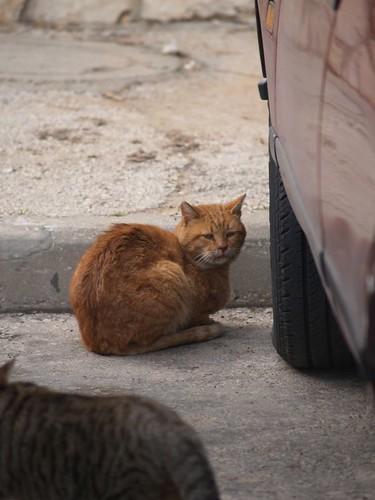 cat 202/248