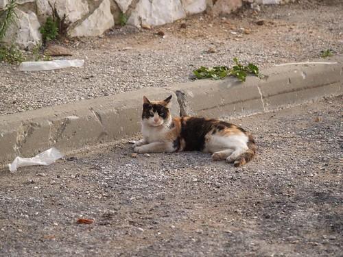 cat 208/248