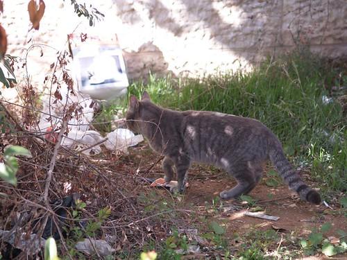 cat 224/248