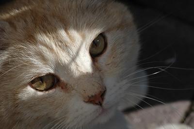 Lauri the Cat