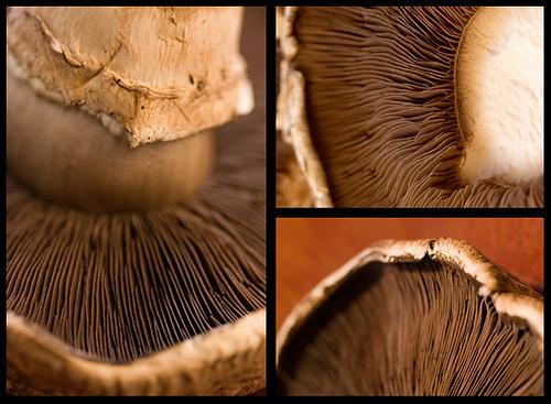 DMBLGIT #5 entry (15) - Portobella Mushrooms (NOT MINE)