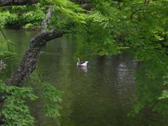 金鱗湖のほとり