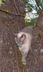 Mojo tree