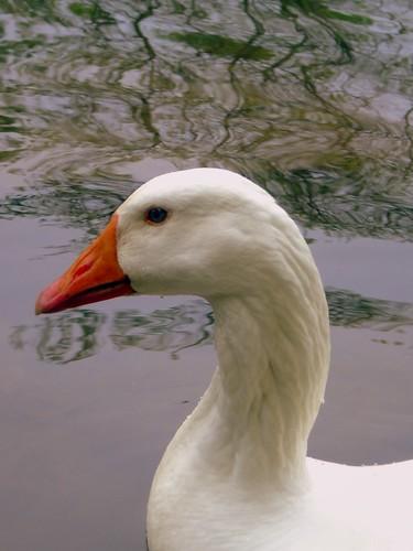 Uncle Louie...the goose