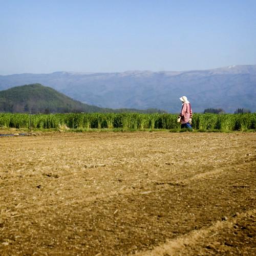 Nagano Farming