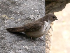 Crag Martin, Tomar (Portugal), 18-Apr-06