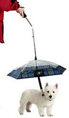 paraguasperro