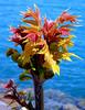 Lake plant/flower