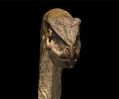 coelurosaur