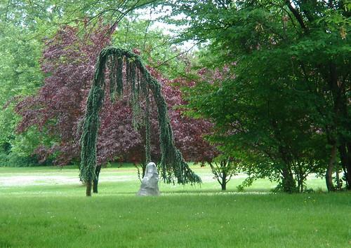 Der armselige Baum