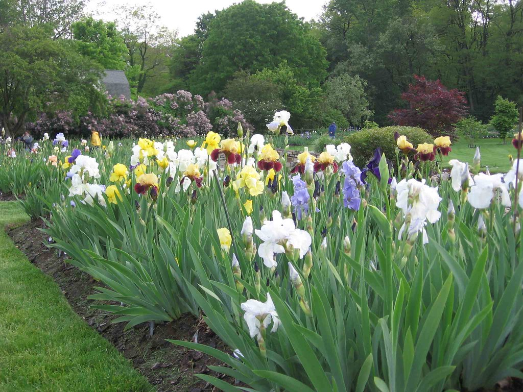 Still early at Presby Iris Gardens