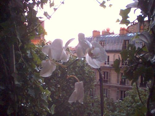 Comme une orchidée sous la pluie de mai (1)