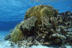 Recife de coral no raso