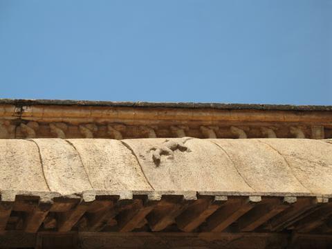 temple-lizard