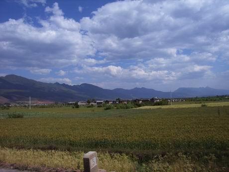 平地的农田2