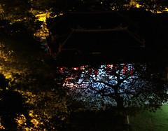 夜深人靜(五)之廟