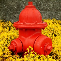 Red Hydrant [SQUARED] photo by TahoeSunsets