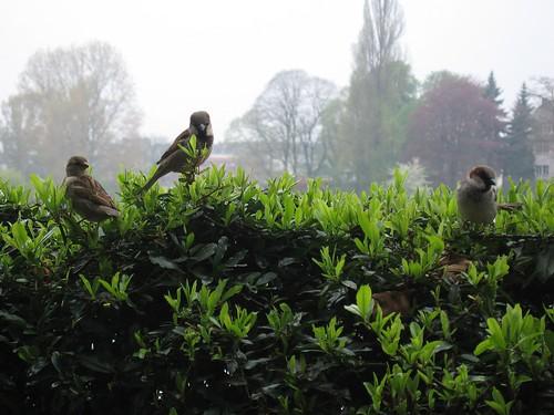 birdies waiting for crumbs