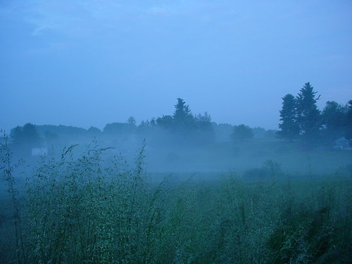 Morning mist over the farm pond