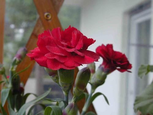 Mom's flowers9