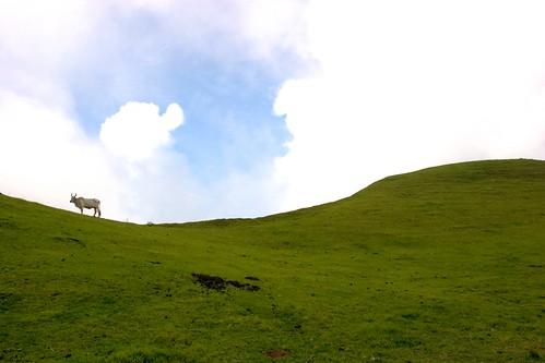 Mt. Gulugud Baboy -01 .jpg