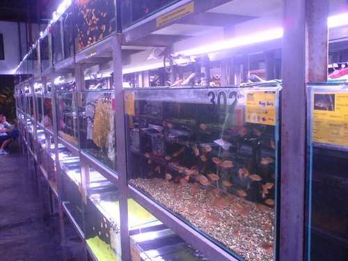 Aquarium Fish Stores Near Me