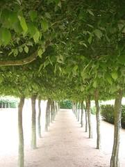 068 pitmedden garden