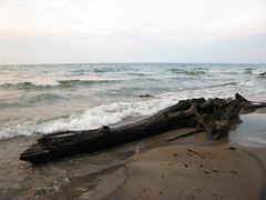 Driftwood, north beach, Centre Island, Toronto