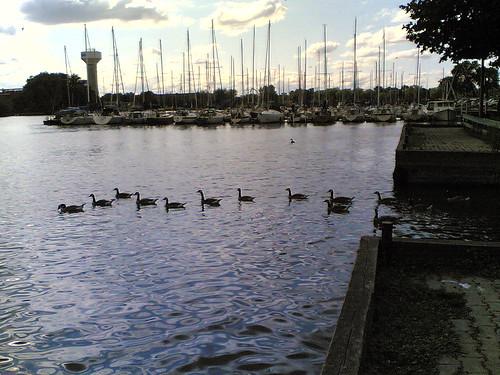 geeseandboats