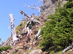 Yellow Aster Butte 064