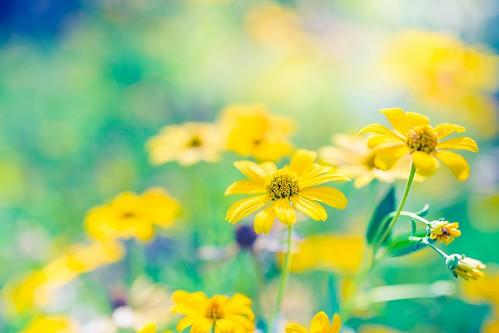Blue blooming - 10 Sep 2017 - Flickr