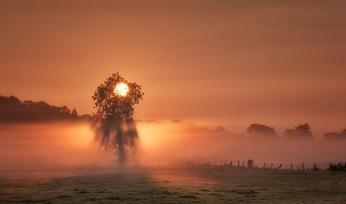 Tree of Light - 14 Sep 2017 - Flickr