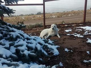 Mavis and snow