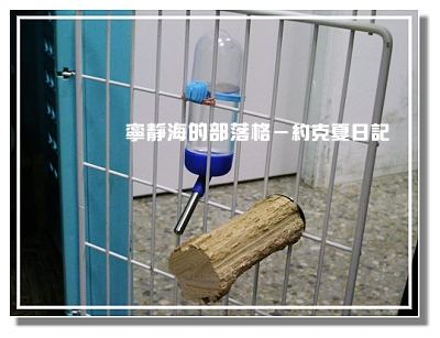 約克夏日記_20060316_飲水器與磨牙木