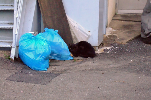 ゴミ捨て場の猫