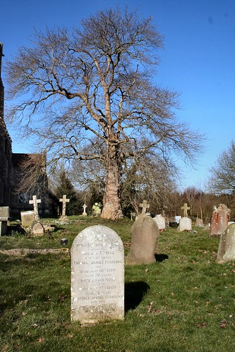 St Helen's Ranworth Graveyard and Oak tree