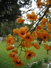 Flowers, on the way to Bomdila