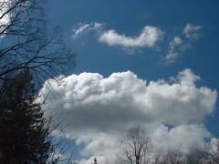 skycrows