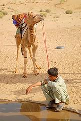 Camel and Mr Win, Jaisalmer, Rajasthan, India Captured April 12, 2006.