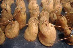 patatas_detalle