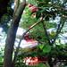 Ueno Park - Five-storied pagoda